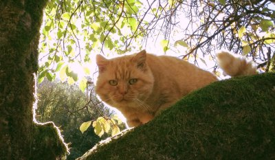 Roter Kater Mikesch sucht neues Zuhause