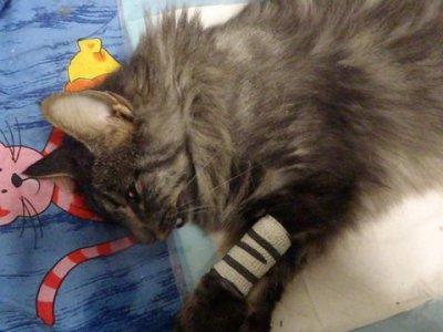 Katze in Bischofswiesen-Stanggaß angefahren und verstorben